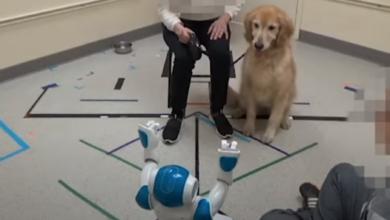 Photo of Alexa, scendi il cane!