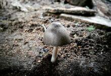 Photo of A passeggio nello spazio? Un fungo magico ti proteggerà